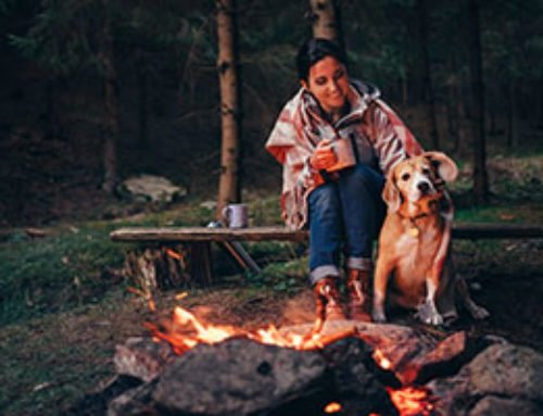 11 Most Useful Tips for Camping with Dogs