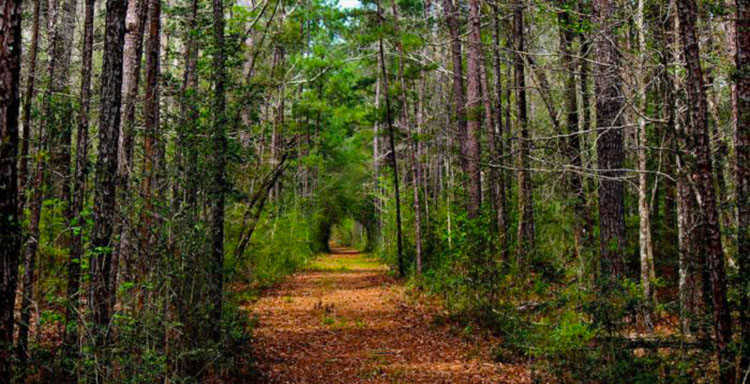 Big Thicket National Preserve in Texas.