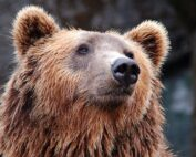 Bear Safety Camping Tips