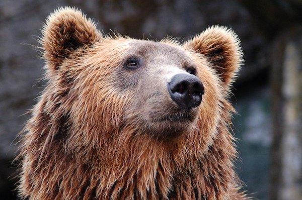 7 Bear Safety Camping Tips