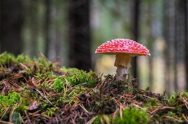 Mushroom on hiking trail